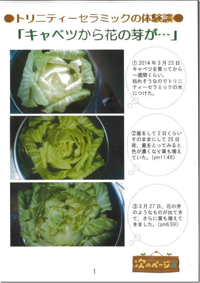 201408yumeya_cabbage_ページ_1